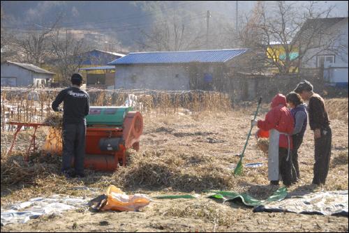 탈곡하는 모습 탈곡기를 이용하여 가족이 콩을 터는 모습