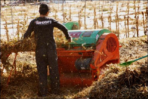 탈곡 요즘 농촌에서도 보기 드문 탈곡기의 모습
