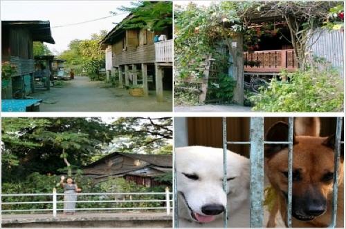 대문의 차이 마을 내에서도 대문의 있고 없고의 차이로, 묘하게 대비된 집집마다의 풍경