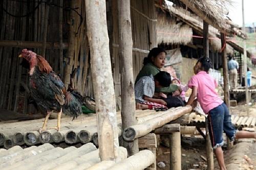 닭의 주인은 누구일까? 자유롭게 마을 곳곳을 누비는 닭들
