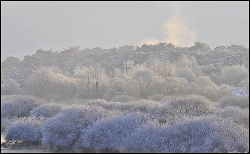 물안개가 피어 오르자 나뭇가지에 얼음꽃이 피었습니다.