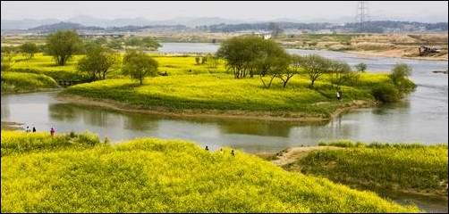 영산강 동섬의 아름다운 풍경입니다.  그림처럼 아름다운 풍광으로 인해 많은 사람들이 즐겨 찾는 곳입니다.