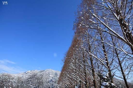 산포수목원의 설경