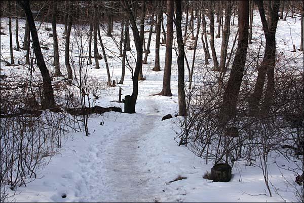 소나무 사이로 길은 이어진다.