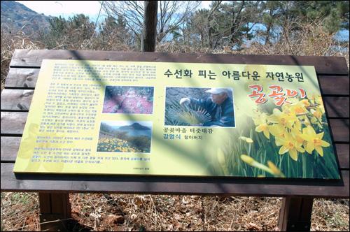 공곶입구안내판 공곶마을 입구에는 강명식 할아버지와 수선화꽃을 담은 안내판이 이곳의 내력을 설명하고 있다.