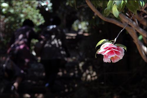 동백꽃 공곶마을을 구경하고 나가는 출구에는 한 송이 동백꽃이 목을 길게 내민 듯 달려있다. 뒤로 어두운 동백꽃터널을 올라서야만 밖으로 나갈 수 있다.