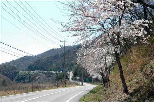 벚꽃길 거제도 삼거리에서 구천삼거리로 이어지는 벚꽃길. 차량은 길을 멈추게 하고 차에 내리게 만든다. 아름다운 길이다.