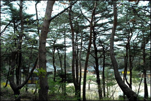 보광사 소나무 숲에 자리한 원효대사가 공부를 했다고 전해지는 불당골에 자리한 보광사