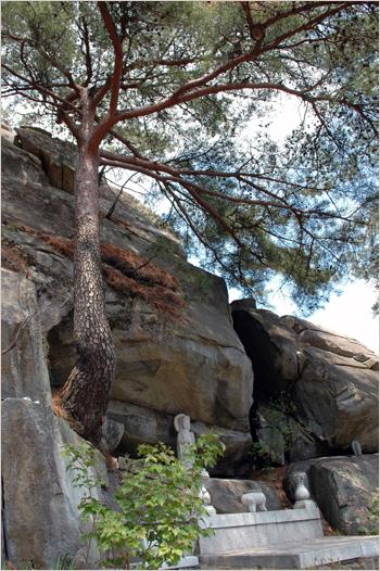 정취보살 암벽에 뿌리를 내린 소나무는 정취보살님을 보호하며 정취암을 지켜오고 있다.