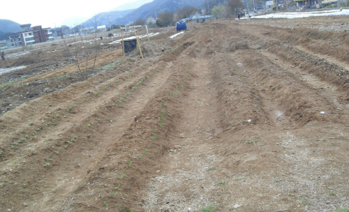 5월은 본격적으로 농사가 시작되고 흙은 점차 녹색으로 물들어 간다.