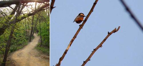 금대사느산책로와 이름 모를 새 금대산은 지표면이나 하천에서 높이 50m도 안되는 도심 속 낮은 산이지만 많은 새들이 서식하고 있다.