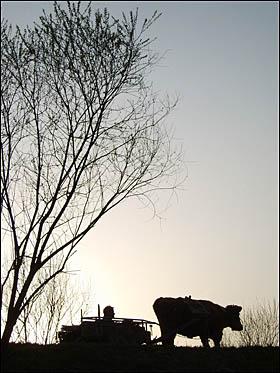 영화 <워낭소리>의 한 장면.