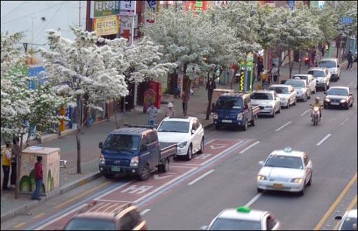 자동차가 많은 도로에 이팝나무꽃이 많이 피었어요.
