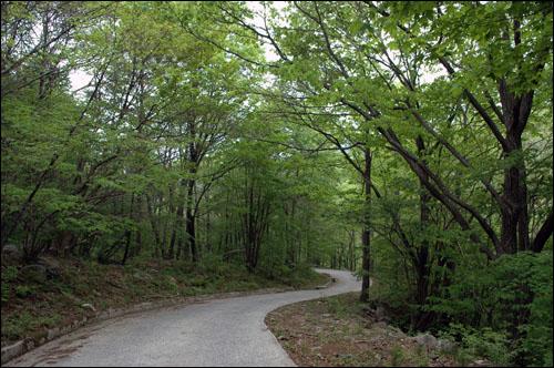 녹색 숲길 거창군 북상면 월성리에서 함양군 안의면 상원리까지 총 11㎞의 숲속 길. 전 구간이 시멘트 포장길로 비록 자동차로 이동했지만, 기회가 닿는다면 김밥 싸서 녹색 향기 맡으며 걸어보고 싶은 정말로 멋진 길이다.