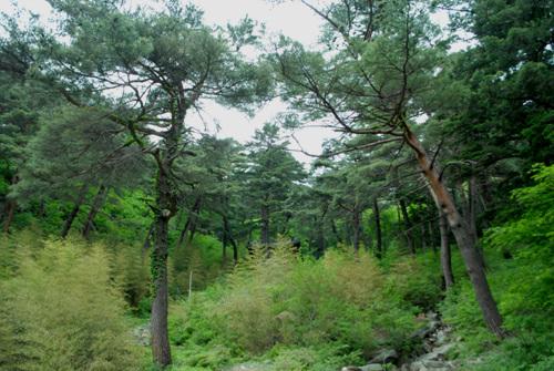 산신각 오르는 길 산신각을 오르는 길은 대밭이 조성되어 있다. 옛 절터의 흔적은 찾아볼 수가 없다