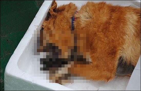 부산유기동물보호시민봉사모임은 유기동물보호소의 관리에 문제가 많다고 지적했다. 사진은 방치된 사체를 강아지가 뜯어 먹고 있는 장면.