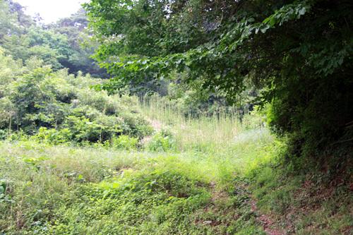 숲 그저 걷는 숲이라면 좋겠다. 그러나 날파리와 모기 떼들이 극성스럽게 달라붙는다