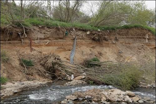 4대강 국토개조로 인해 붕괴되기 시작한 지천의 모습입니다.  오랜시간 강둑 위에 자라던 나무들이 역행침식으로 인해 바닥이 유실되기 시작하자, 힘없이 무너졌습니다. 얼마나 많은 모래가 낙동강으로 떠내려갔는지 보여주는 것입니다. mb표 국토개조는 국토를 파괴하는 망국적 국토개악임을 보여주고 있습니다.