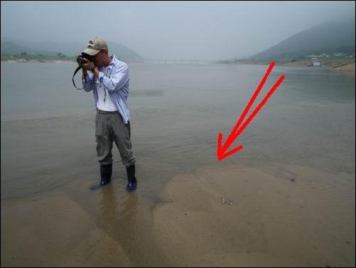5조 2000억 원을 들여 이미 준설이 끝난 곳인데... 이게 뭔가요? 이미 준설이 완료된 낙동강입니다. 저 아래 달성댐이 보입니다. 그러나 준설이 완료된 준설선 안쪽으로 한참을 걸어들어갔지만, 수심은 발목 정도입니다. 떠 밀려온 모래가 강 물 속에 쌓인 것이 보입니다. 하나마나한 일을 위해 강 물속에 국민 혈세를 퍼부은 것이지요.