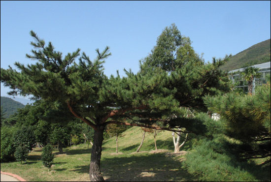 완도수목원 풍경. 올 여름 생태 피서지로 인기를 모으고 있다.