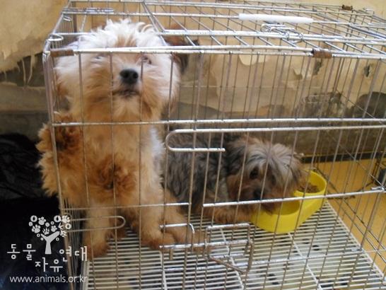 늘어 난 개들의 복지  감당할 수 없이 늘어 난 개들의 열악한 복지는 누가 책임져야 하는 것입니까..