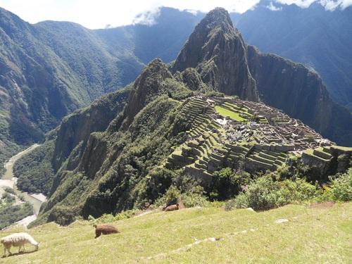 풀을 뜯어먹고 있는 라마 뒤쪽으로 마추픽추와 우뚝 솟은 와이나픽추
