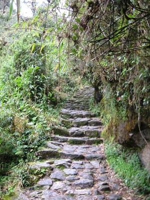 잉카트레일을 따라 마추픽추로 가는 숲속 길