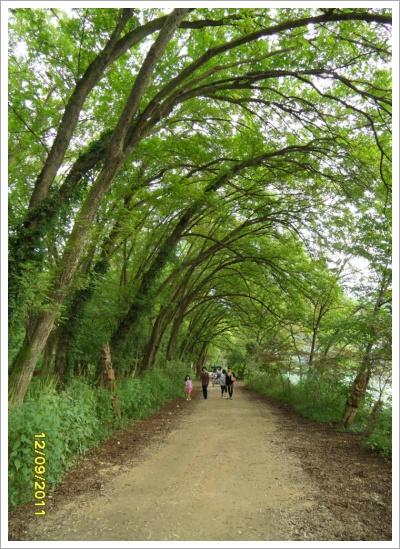 남이섬... ...강을 끼고....자전거 산책...