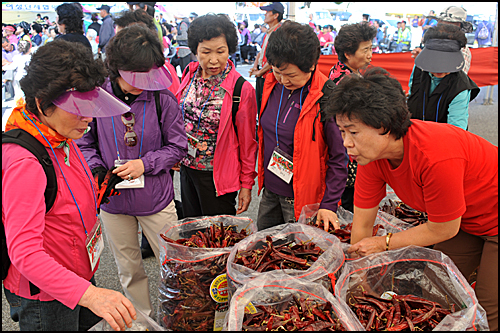 지난달 21일부터 24일까지 충북 음성군에서 열린 고추 축제에 참가한 도시 소비자들이 고추를 고르고 있다.