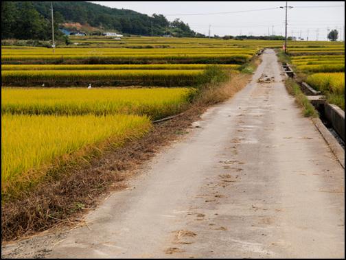 가을 들판 구미시 장천면으로 가는 길에 '신동'이라는 마을을 거쳐갔어요. 이곳은 해마다 가을이면 늘 다시 찾아가는 곳이랍니다. 층층이 된 논에 나락이 빛깔 고운 노란옷으로 갈아입고 한창 튼실하게 익어가고 있습니다.