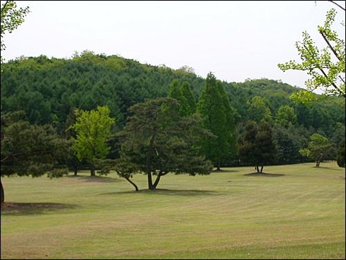 세종연구소 앞마당 광활한 잔디밭