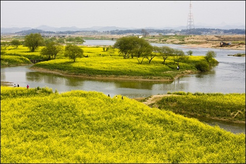 그림처럼 아름다운 영산강 동섬.  영산강 중에서 가장 아름다운 동섬. 이곳에 어떤 일이 일어나고 있을까요?