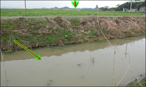 영산강 죽산보 곁의 지천입니다. 위쪽 가운데 화살표 있는 곳이 죽산보입니다. 보이는 것과 같이 수질이 심각합니다. 그런데 지천의 수질 개선은 없이 운하만 만들어 놓으면 강물이 맑아지나요? 영산강운하의 내일은 뻔합니다.
