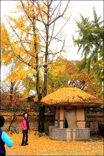 가을 월매의 집에 내려앉은 가을을 즐기고 있는 관광객들