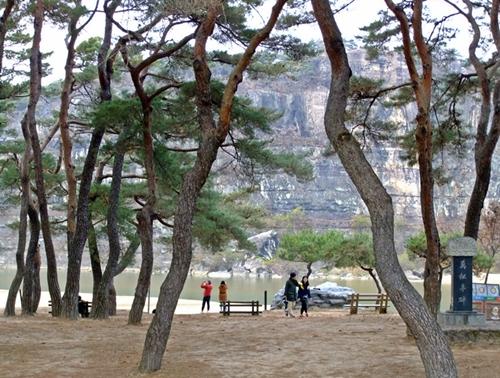 강건너 층암절벽 부용대와 만송정 소나무숲이 한폭의 그림처럼 잘어울린다.