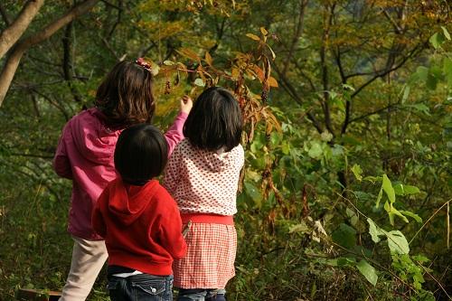 키가 닿는 곳의 열매를 채취하는 아이들.