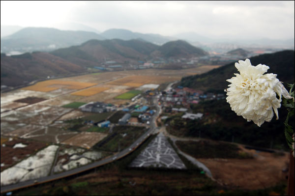 추도 봉화산 꼭대기에 누군가 국화 한 송이를 꽃아 놨다. 시들어 가는 국화 송이 뒤로 보이는 봉하마을과 노무현대통령 생가와 묘역.