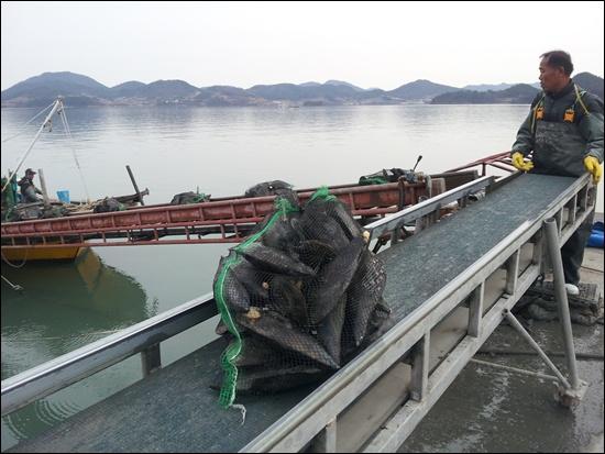 바다에서 잡아온 키조개를 배에서 용달차로 푸는 콤베어 위에 키조개가 운반되는 가운데 선원이 옮겨 싣는 작업을 하고 있다.