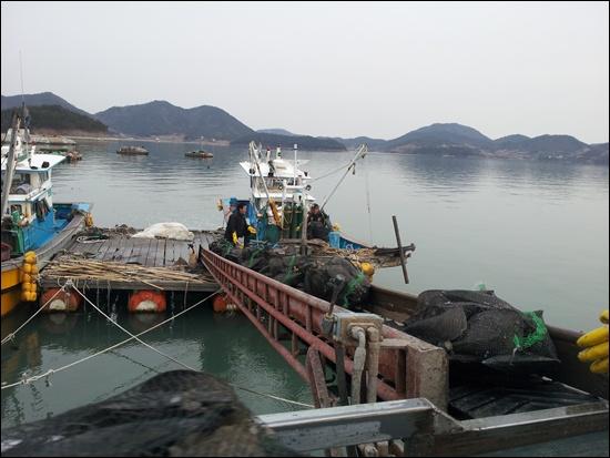 바다에서 잡아온 키조개를 배에서 용달차로 푸는 콤베어 위에 키조개가 운반되고 있다.