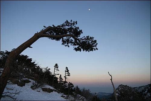 권금성을 지키는 바람결에 날리는 소나무