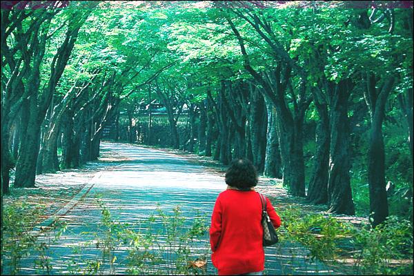 가림막 걸어갈 수 없는 길, 그 길을 바라보면서 언젠가는 걸어가는 꿈을 꾼다면 그것은 꿈 속에서나 가능한 일일 터이다. 현실 속의 인간들은 끊임없이 그 걸어갈 수 없는 길을 걸어갈 꿈을 꾼다. 그래서 가상이며, 그 가상을 잡으려 하기에 현실의 삶은 왜곡된다.
