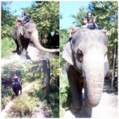 코끼리 트래킹