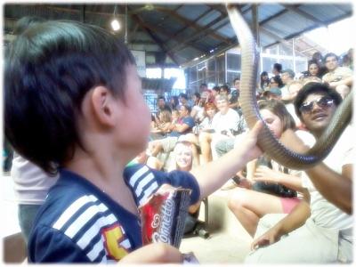 킹코브라쇼 900비트하는 킹코브라쇼는 아이에게 뱀을 만져보게 해 주더라고요. 울 아들은 겁도 없이 잘 만지더라고요.