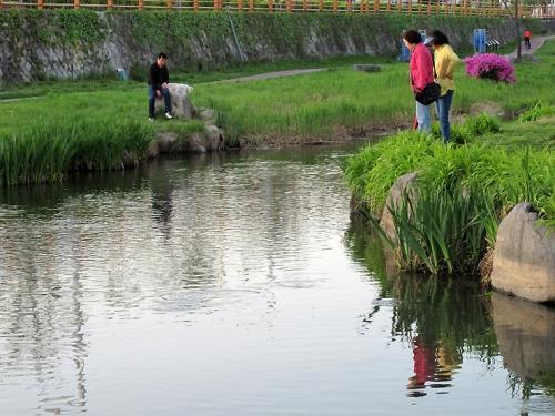 수원천에서 노는 물고기들을 바라보는 시민들