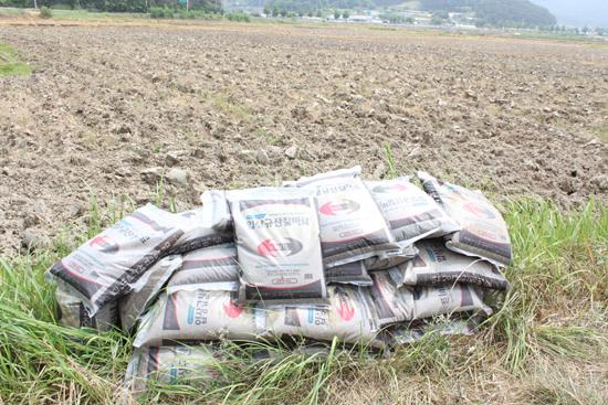 국비로 지원했건만... 논의 땅심을 높이기 위해 국가에서 지원한 규산질 비료도 가뭄으로 인해 물을 대기 어려워지자 논둑에 방치돼 있다.