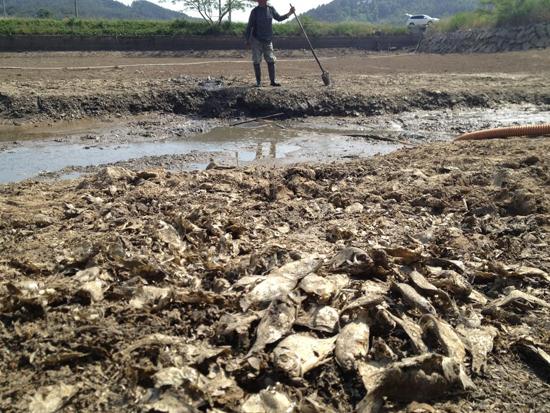 농부의 한숨 태안군 이원면 포지리 저수지가 가뭄으로 말라버리자 한 농부가 한숨을 내쉬고 있다. 앞쪽은 가뭄에 말라죽은 물고기떼.