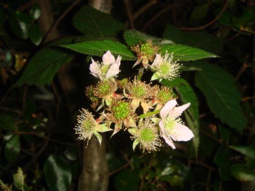 블루베리 꽃