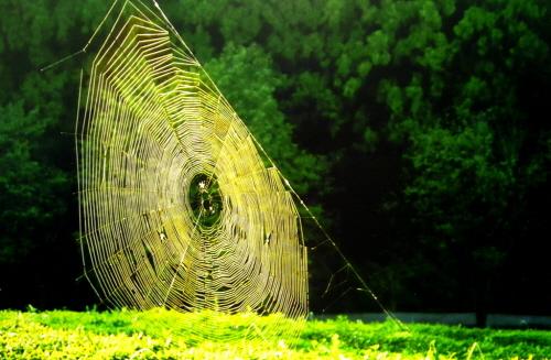 어느 날 아침 거미가 집을 짓고 있는 모습을 지켜본 <아침의 징>