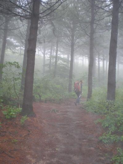 바우길의 나그네 짙은 운무에 싸인 대관령 옛길, 그 황홀한 숲으로 걸어갔다.