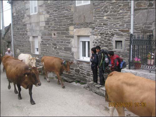 아이들은 산티아고 순례길에서 소, 양, 말 등 동물들을 자주 만났다고 합니다.